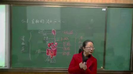 华师大版科学八上5.1《食物的消化和吸收》课堂实录教学视频-第一课时,范蓉蓉