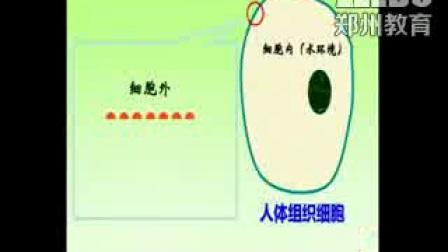 《生物膜的流动镶嵌模型》高一生物-郑州回中:唐宁