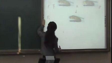第五届电子白板大赛《基因在染色体上》(人教版生物高二,北京市第十三中学:王玉婕)
