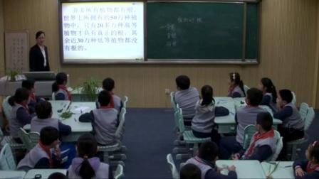 小学科学青岛版四上《植物的根》山东赵红梅