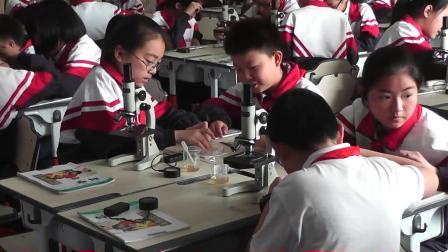 教科版小学科学六下第一单元第7课《用显微镜观察身边的生命世界-三》课堂教学视频实录-邢露